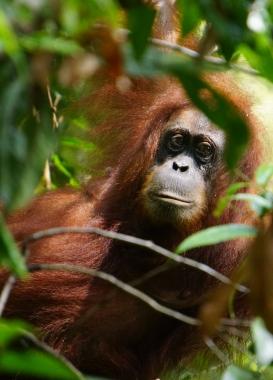On the first day we went to the Orangutan feeding platform.