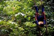 Bandie, swinging on the vines.